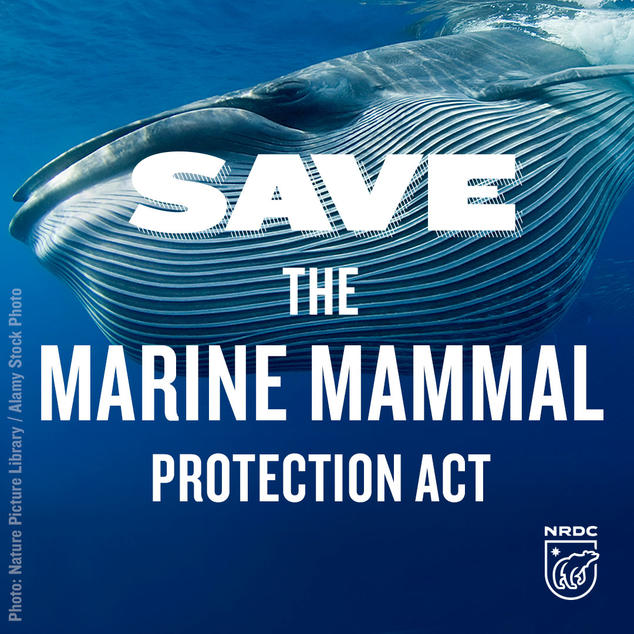 7_3_savemarinemammal_brydeswhale_calltoaction_2.jpg