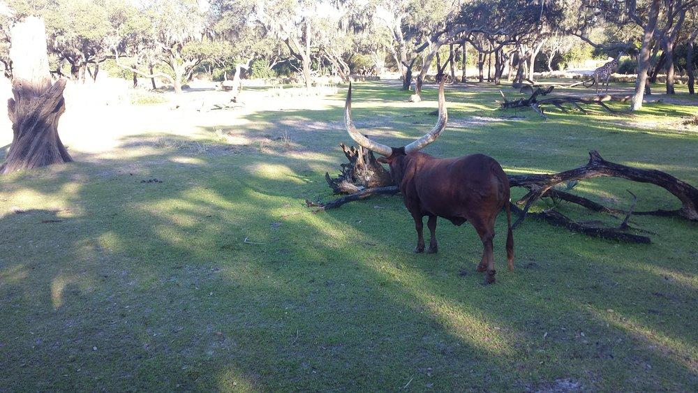 Impressive horns.