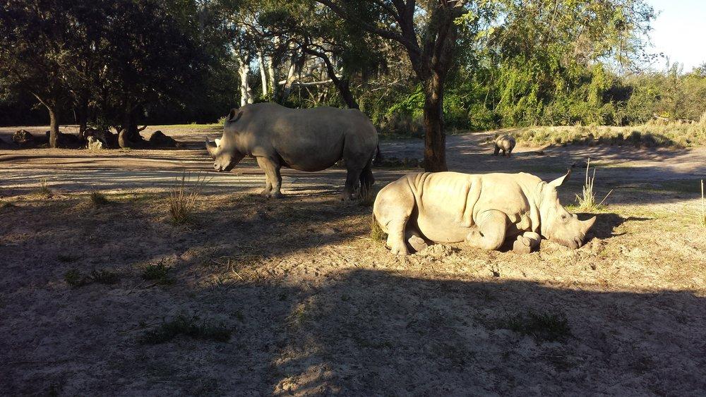Actual rhinos.
