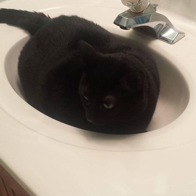 Miss Melody. #catsofinstagram #ilovemycat