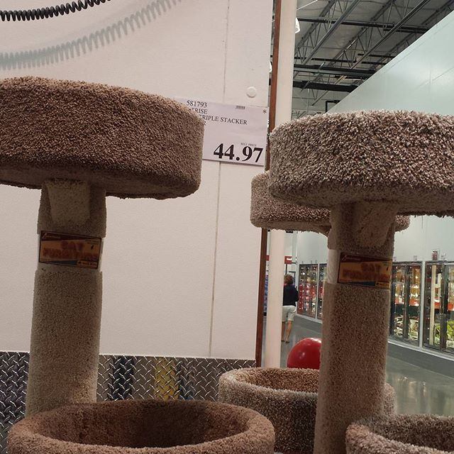 Awesome deal on cat towers at Costco. We got two!
