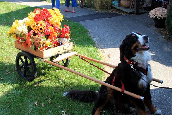 New Glarus Wisconsin Harvest Fest