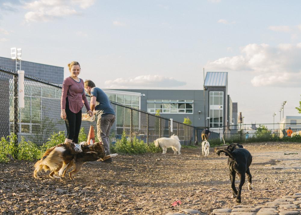Palmer Doggie Depot