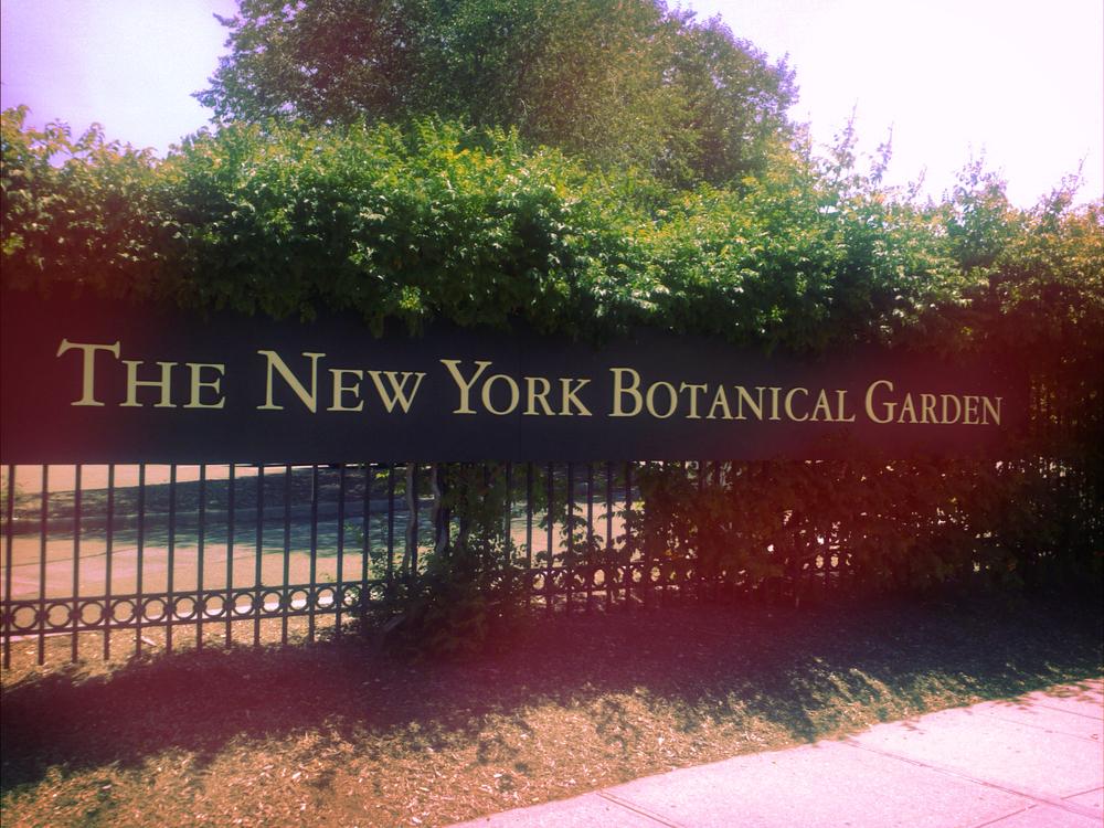 Jardin Botanico II.jpg