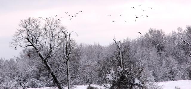 Snow-Days-12-26-12-31.jpg