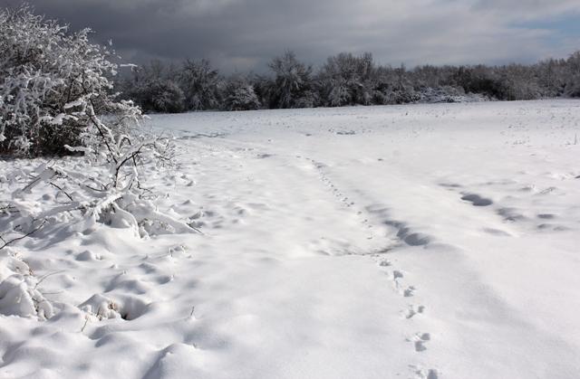 Snow-Days-12-26-12-22.jpg