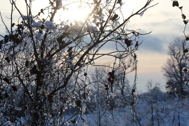 Snow-Days-12-26-12-36.jpg