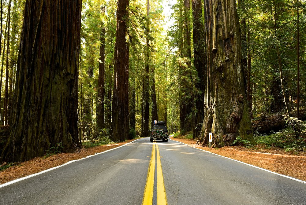 Driving on the Avenue of the Giants through Humboldt Redwoods State Park, California