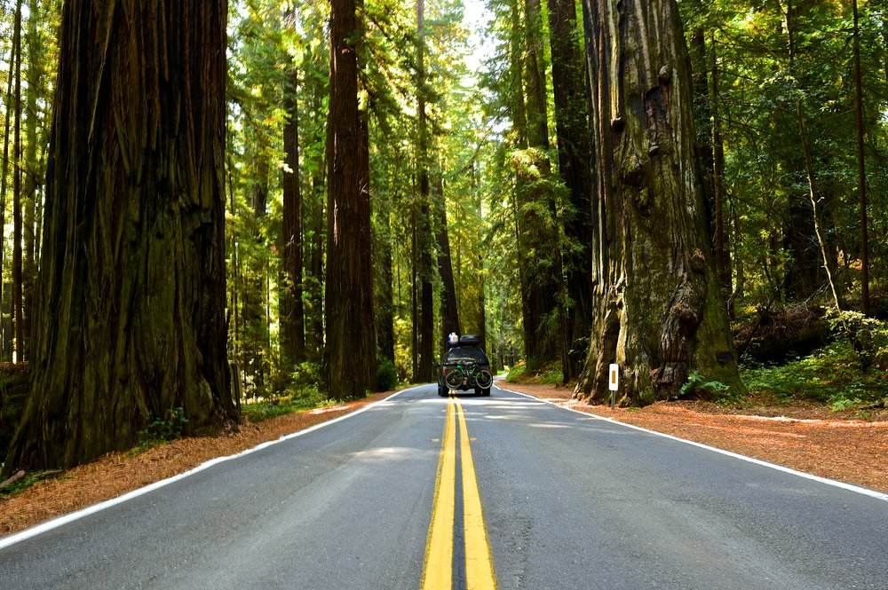 Driving the Avenue of the Giants