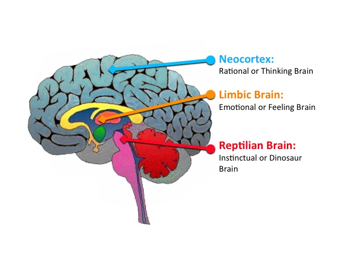 Secrets Of The Brain That Might Just Make You The Best Marketer In