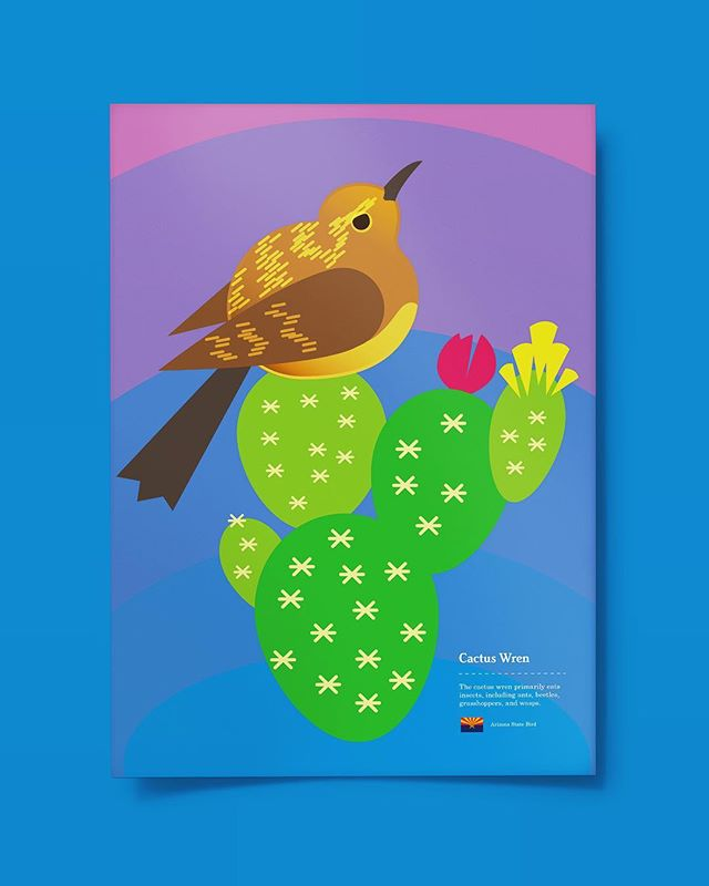 Little Cactus Wren 🌵 #illustration #design #art #drawing #bird #flat #logo #arizona