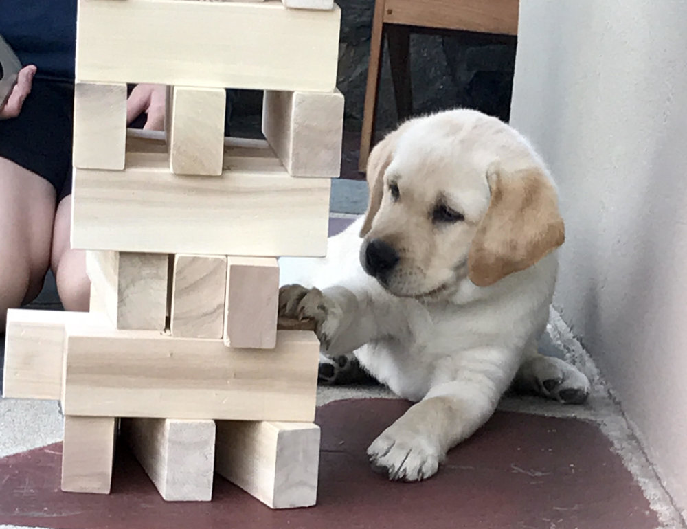 Olivia learns to play Jenga. Photo coutresy of Geraldine K.