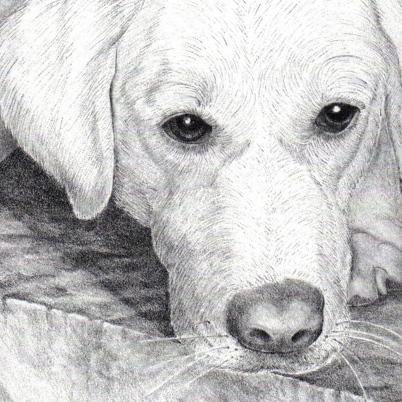 Portrait, Dog, Drawing