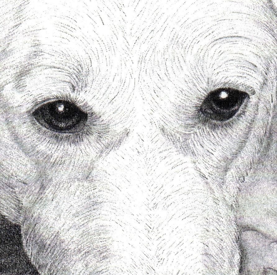 Fine Art Pet Portrait