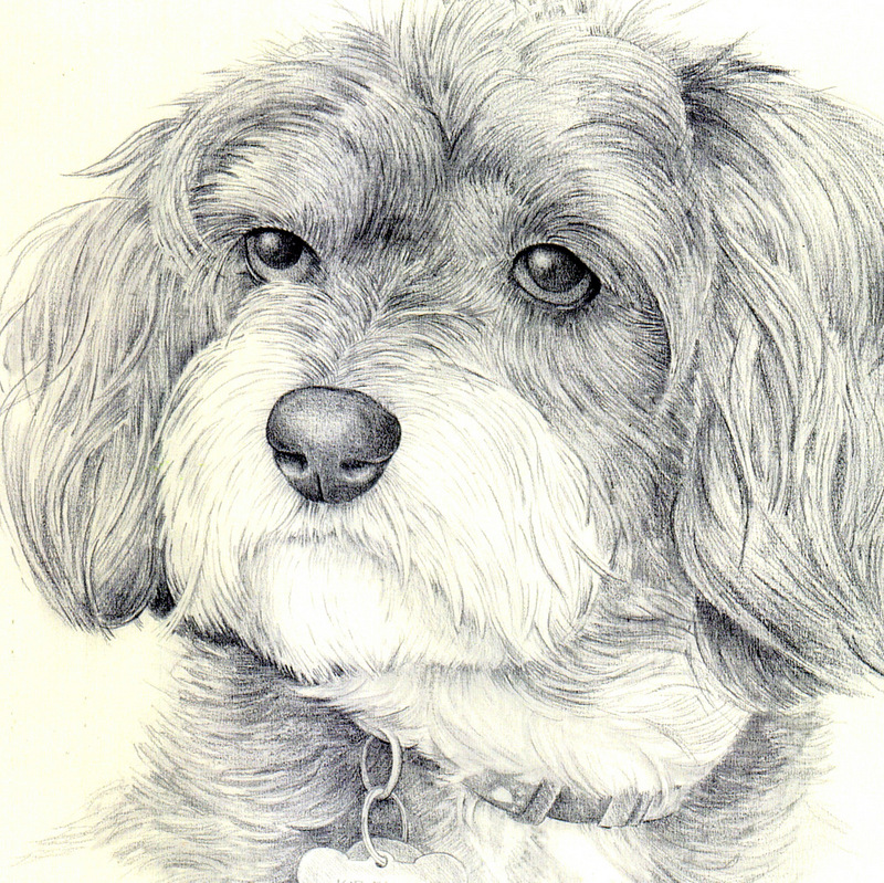 Fine Art Drawn Portrait