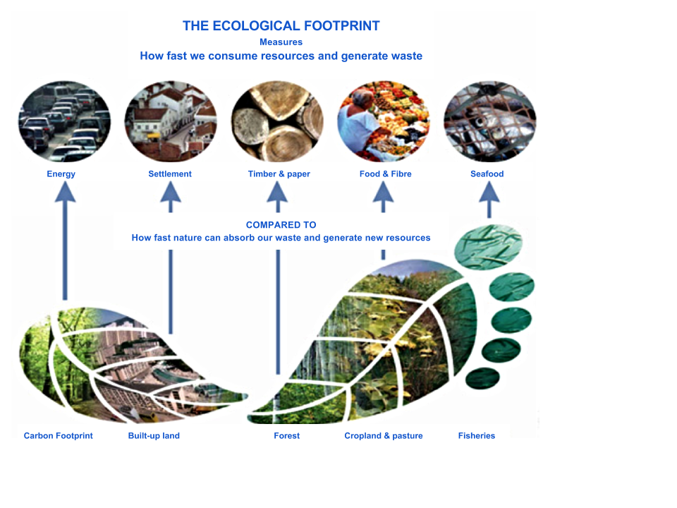 Eco-Footprint (1).png