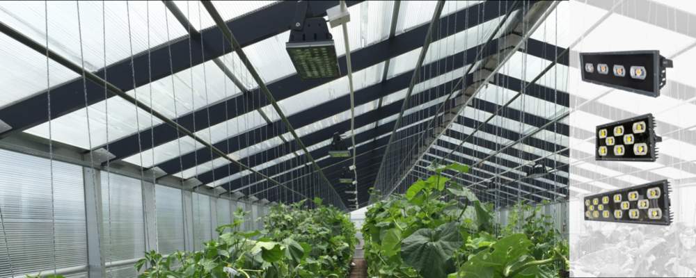 LED Grow Lighting for Faster & Better Crop Yield