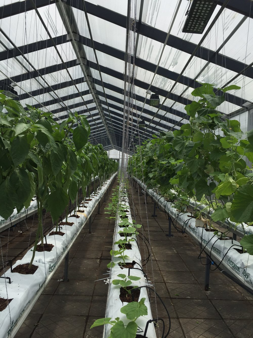 2016 May_ZH greenhouse_2.jpeg