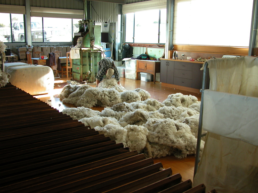 Skirted fleeces ready for baling