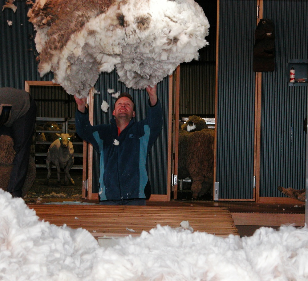 Fleece being thrown onto the skirting table