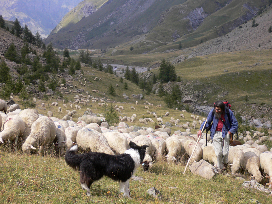 Andre Leroy herding in the southern French Alps
