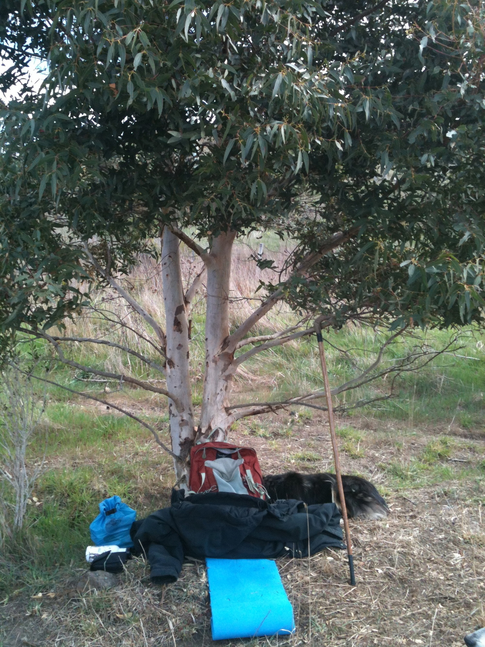 My gear for the day. The tree is one I planted in 2008.