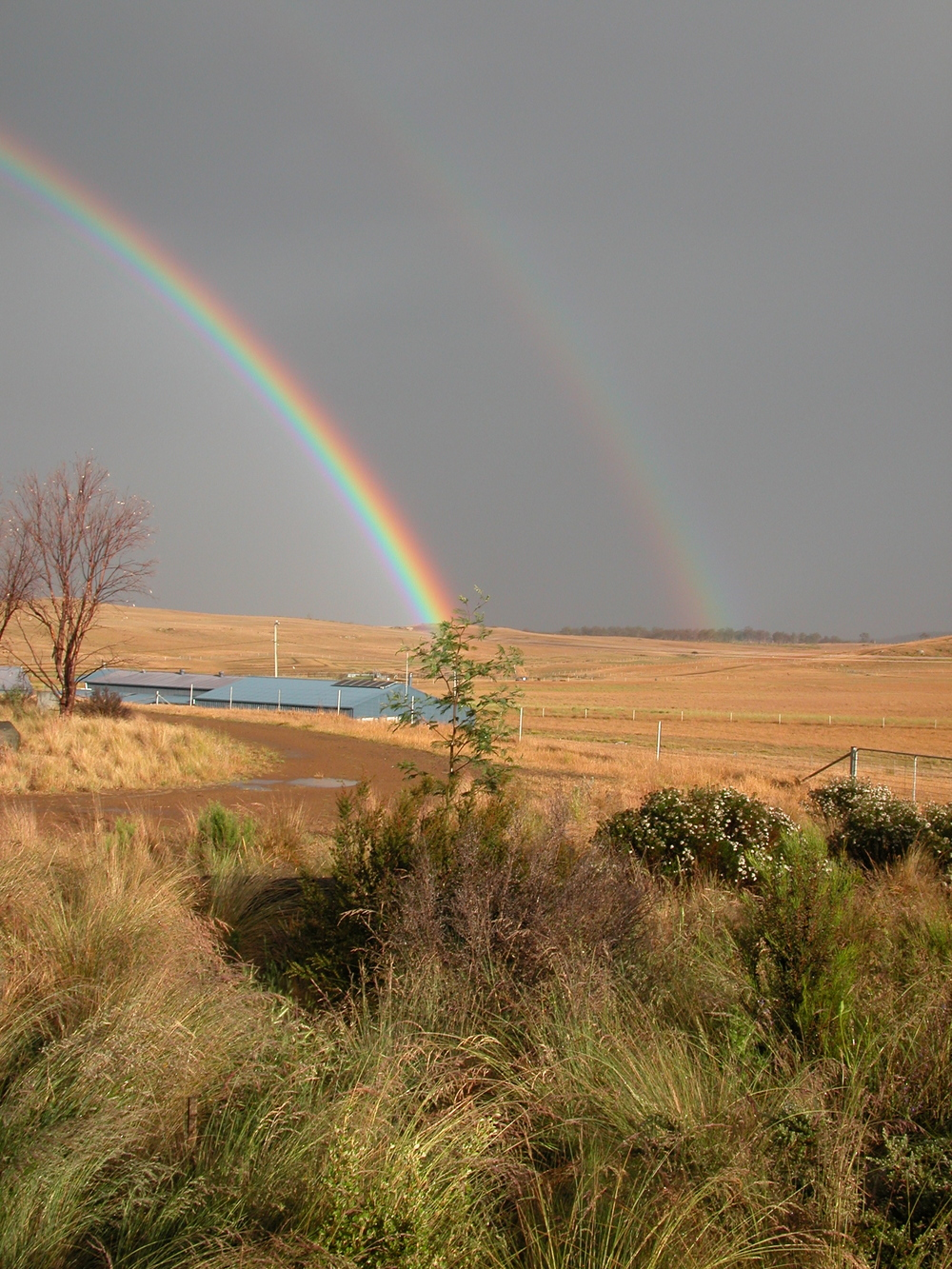 The woolshed at the end of the rainbow.
