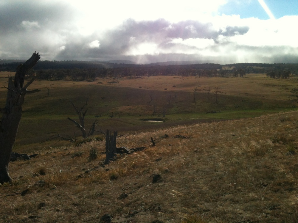 The state of the landscape in mid-December. The foreground and green paddock are mine. The change to a drier paddock in the background marks my boundary. You can click on any of the photos in the Yarn to get a larger image in your browser.
