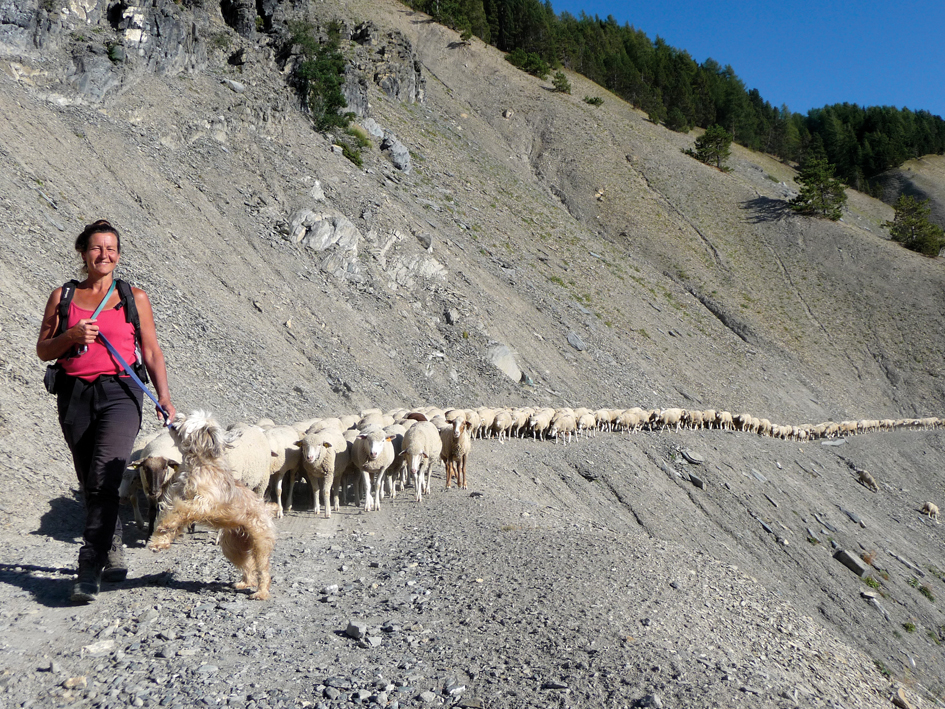 "Marie Labreveux leading her flock in the southern Alps, with her dog Patoune, her ""faithful, loyal, staunch"" companion for 14 years. Patoune's mother was a Pyrenean shepherd, her father a little ""curious and smiley"" dog. Patoune died last December and is greatly missed. Photo copyright M. Meuret. Used with permission."