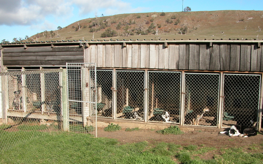 The kennels. From left to right: Pearl, Jax, Blaze, Chance, Joker, Jane and Sis