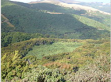 Hinewai Reserve. Regenerating native forest is edging out the gorse, which can't germinate or survive in full shade. Maurice White Native Forest Trust.