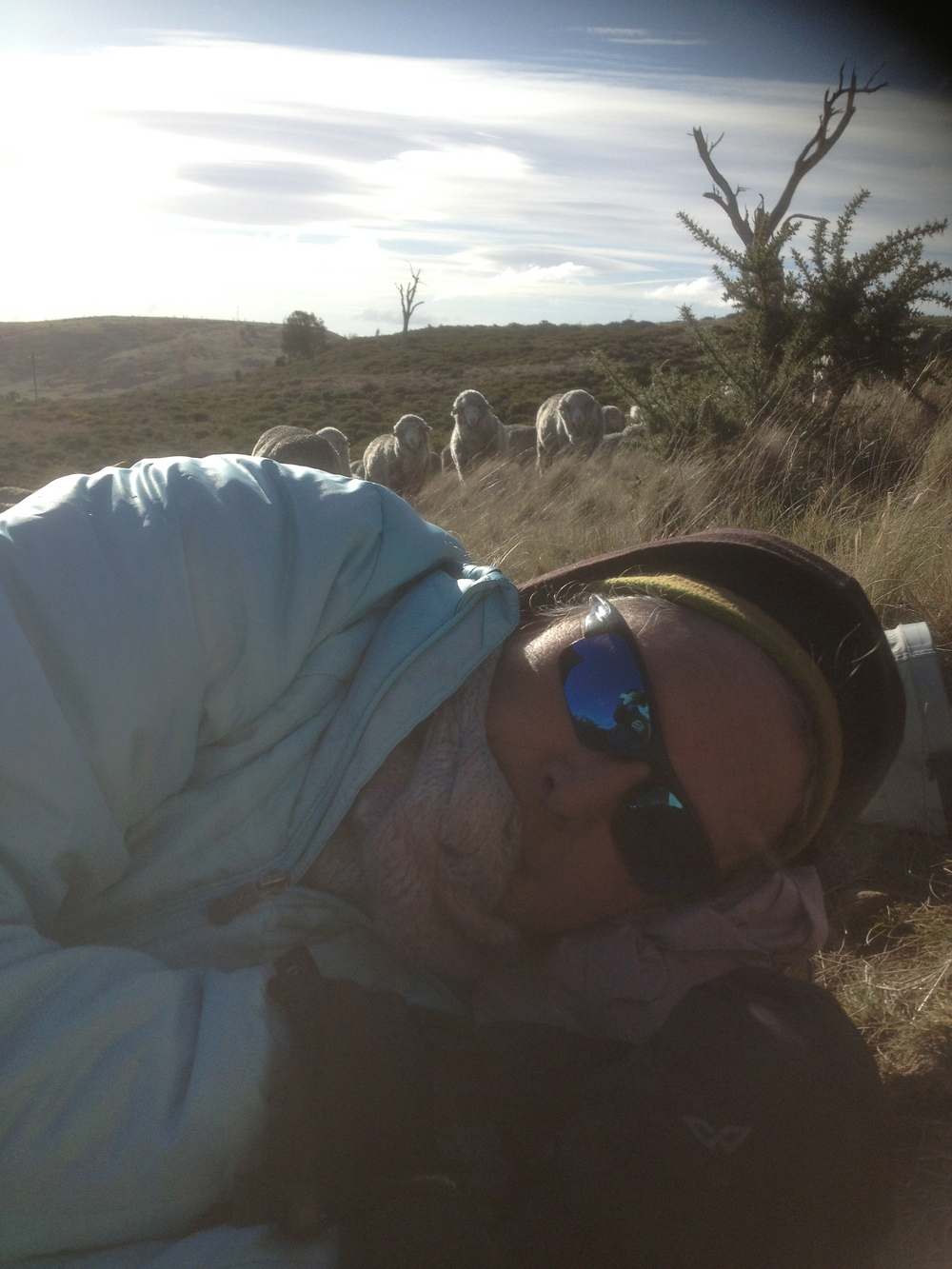 Me having mid-day rest, while the sheep are thinking of moving on. (another Lyn photo, taken without my permission :)