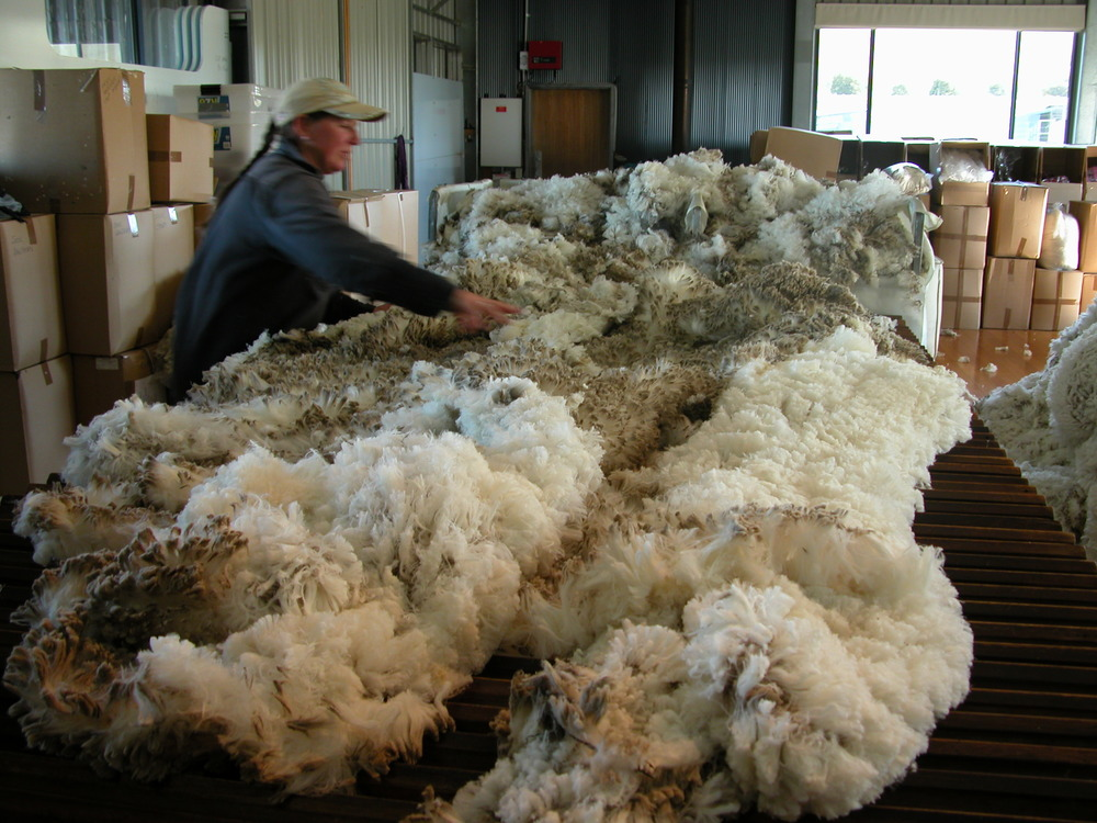 "One of those 3-inch thick winter coats hitting the wool table. Karen fish is starting the process of ""skirting""–removing the edge bits that don't process well into yarn."