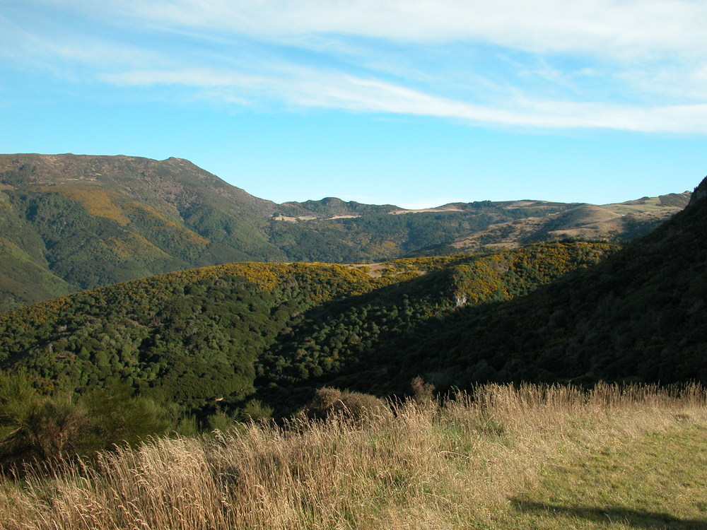 Looking across Hinewai valley. The yellow bits are gorse in bloom, while the dark green is all regenerated native bush.
