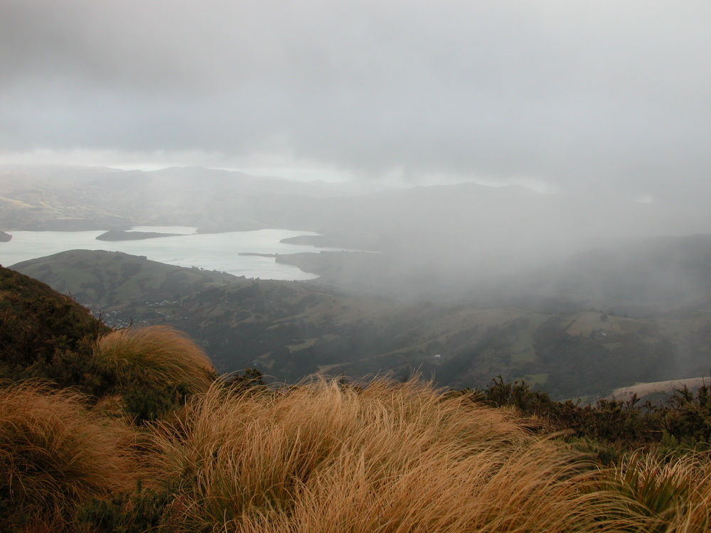 he view of Akaroa harbour from atop Stony Bay Peak. This was my last day at Hinewai, and the mild weather turned abruptly nasty–gale-force winds, snow, hail and rain. I felt right at home, and my new rain gear held up beautifully. I was thankful, though, to make it back to my c*r, and the relative shelter it provided while I ate my picnic lunch.