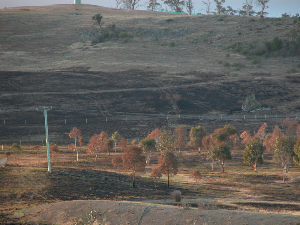 The 8-year-old revegetation area near the highway a week after the burn. DSCN0004