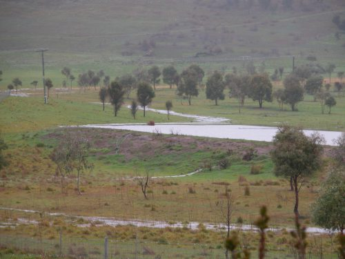 Swan Lake from my back door, using the telephoto lens, yesterday. The inlet stream is now overflowing into the Road Paddock, and you can see a small stream coming out of the bottom of the dam wall--I think it's a rabbit burrow. I'm a tiny bit worried about the integrity of the dam.