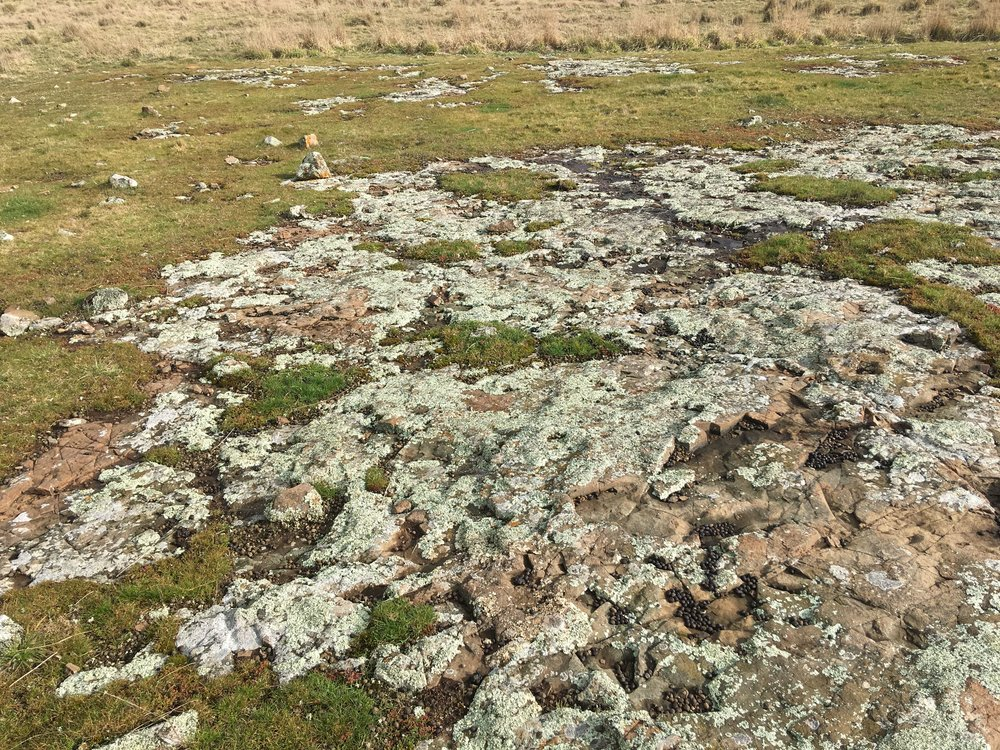 A stretch of dolerite with lichen that caught my eye the other day.