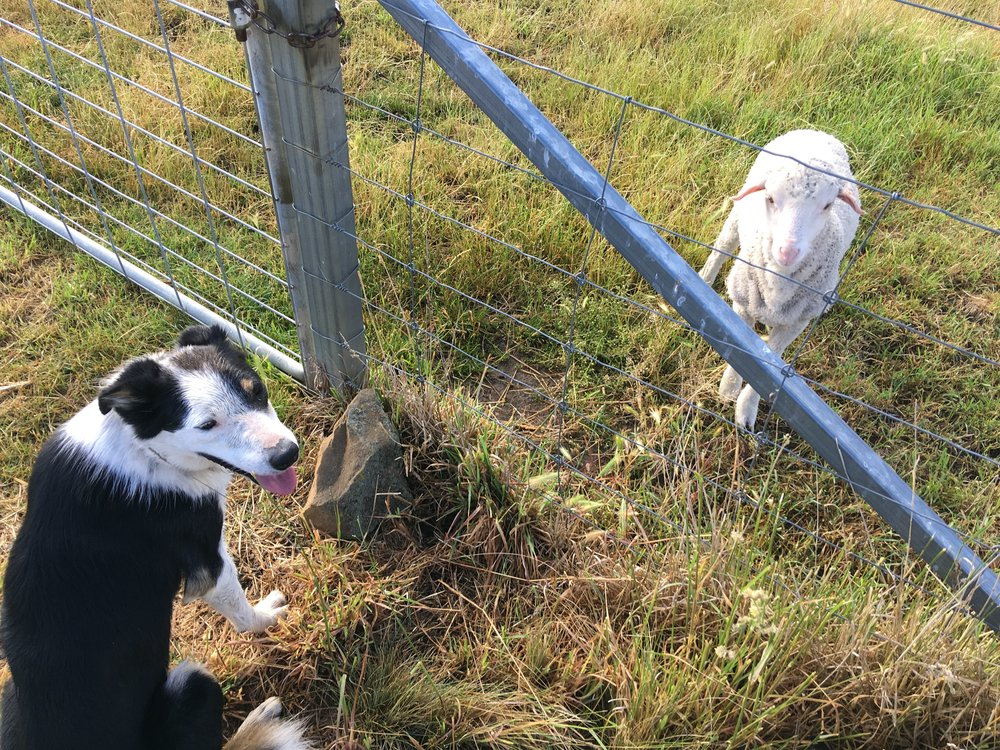 Joker and Freddie at the gate where Freddie gets his bottle. A bit of a stand-off.