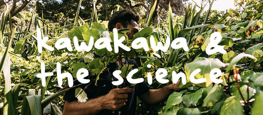 The Science. Why is Kawakawa so good?   The science behind Kawakawa increasingly supports these stories. Kawakawa is super high in anti-inflammatories and has an amazing analgesic content also. Once applied to the skin,  the actives seep into the skin and heal congested and swollen skin, joints and tissue. It is extremely soothing to the skin, so much so that it was also chewed on to treat a toothache as it is a well-known analgesic.   We pick the Kawakawa leaves from our own land on Aotea. We make your balm 100% naturally by steeping the leaves for one week in sweet almond oil. After which we heat for 3-4 hours slowly to extract the high actives into the oil. We then take beeswax from our own beehives and infuse it into the oil making it a beautiful consistency after which it is bottled by hand.