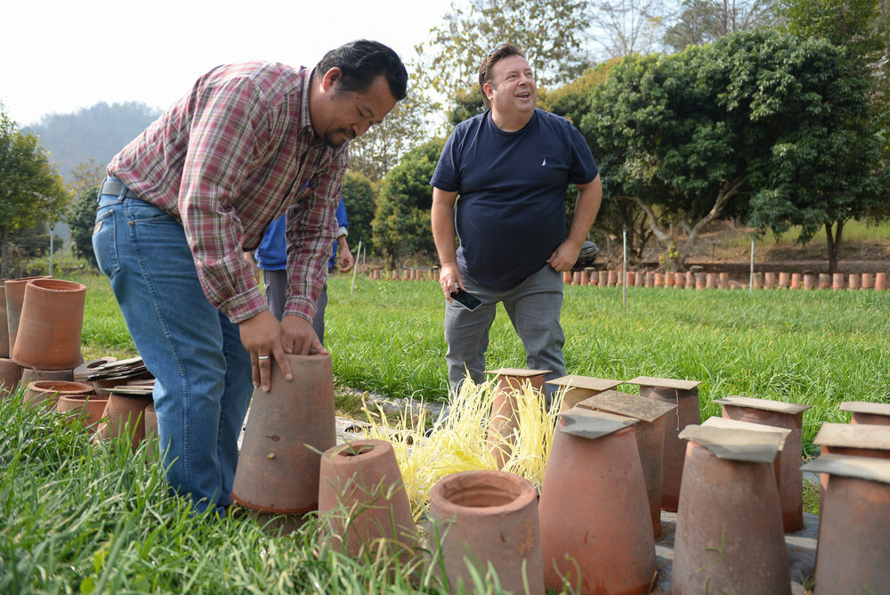 Sydney chef Peter Gilmore looks on as local farmers reveal their garlic chive crops hidden under the claypots. We learnt from the farmer that after the plant matures they place these tall terracotta pots on them in order to restrict sunlight. This causes the plant to grow rapidly and blanches it, producing a pale, yellow colour and a sweeter taste.