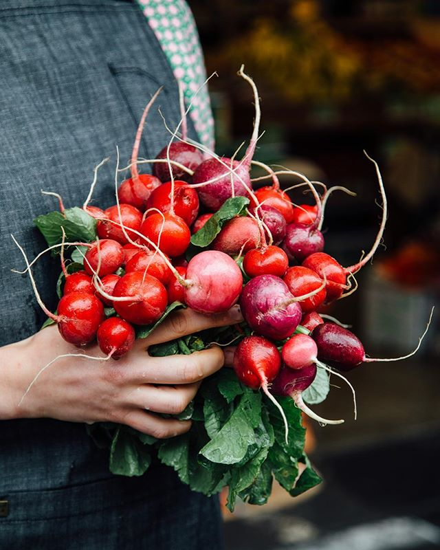 Ravishing radishes @rhubarbrhubarborganics