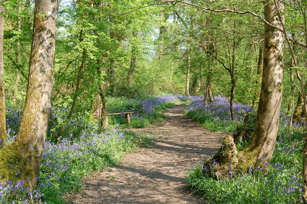 bluebell path.JPG
