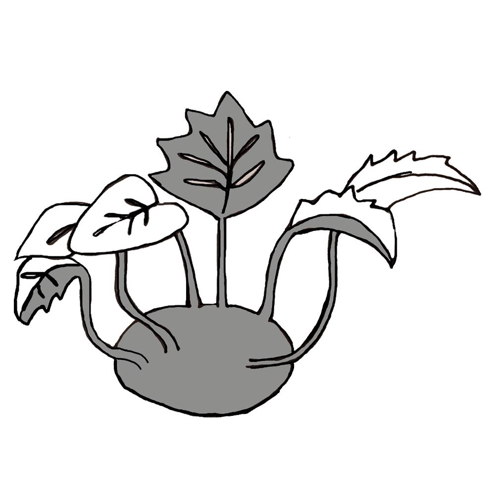 Knutekål og grønnkål -