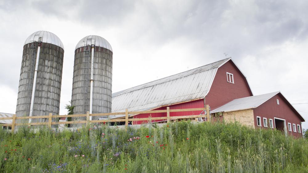 Ackermann Dairy Farm
