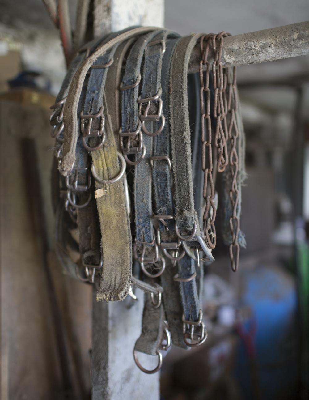 Collar collection