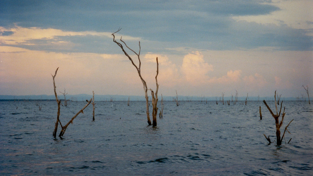 """Drowned Forest"" Lake Kariba, Zimbabwe"