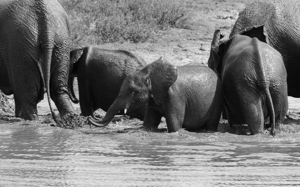 """Elephant bath-time"""