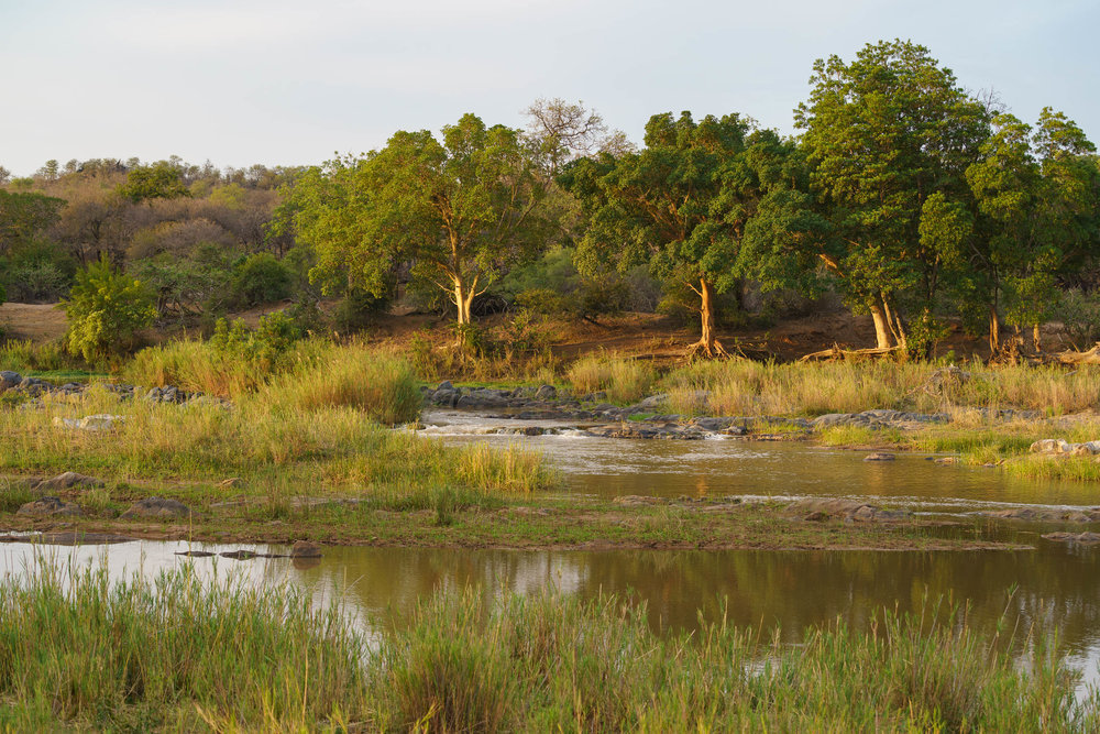 Olifants River in Balule Nature Reserve