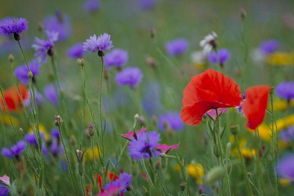 wild flowers-gallery.jpg